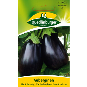 Auberginen Black Beauty